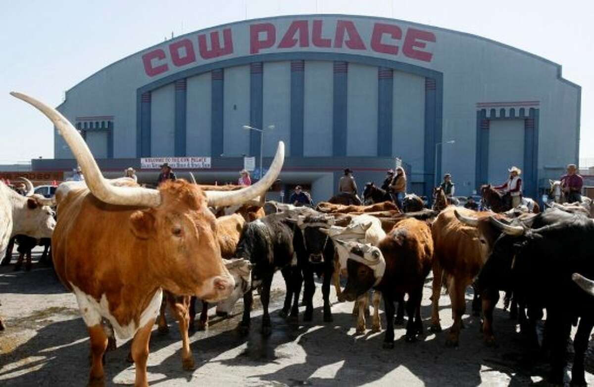 April 3, 2008: A herd of cattle pause in the Cow Palace parking lot after their arrival for the 63rd annual Grand National Rodeo, Horse & Stock Show in Daly City. (Paul Chinn / The Chronicle)