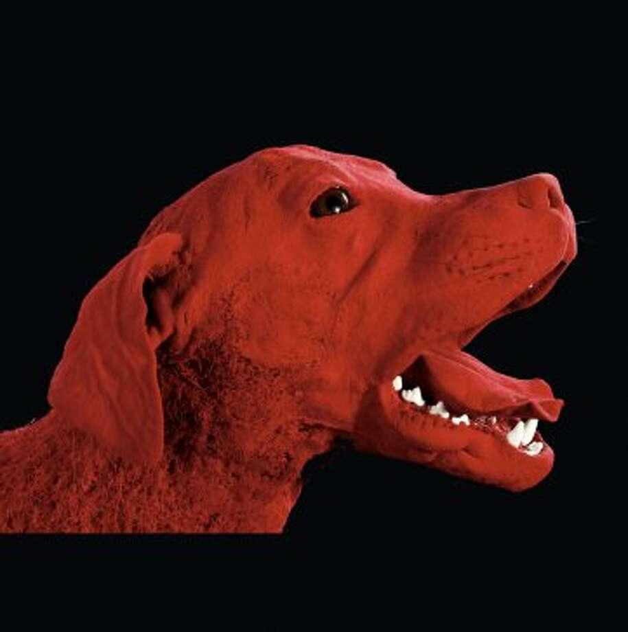"""Plastinated"" animals on display at Gunther von Hagens's Animal Body Worlds. (Gubener Plastinate GmbH)"