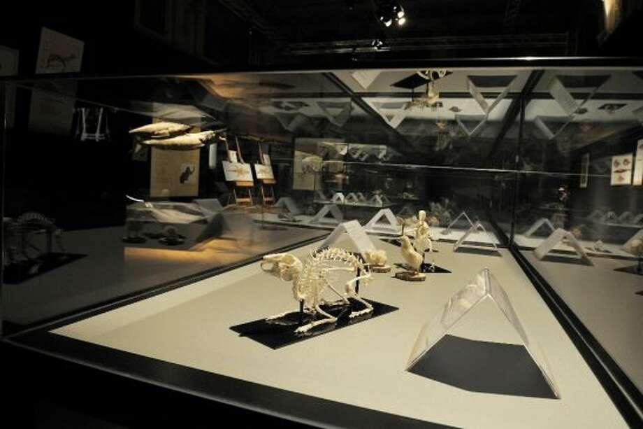 """""""Plastinated"""" animals on display at Gunther von Hagens's Animal Body Worlds. (Gunther von Hagens\\\'s Animal Body Worlds)"""