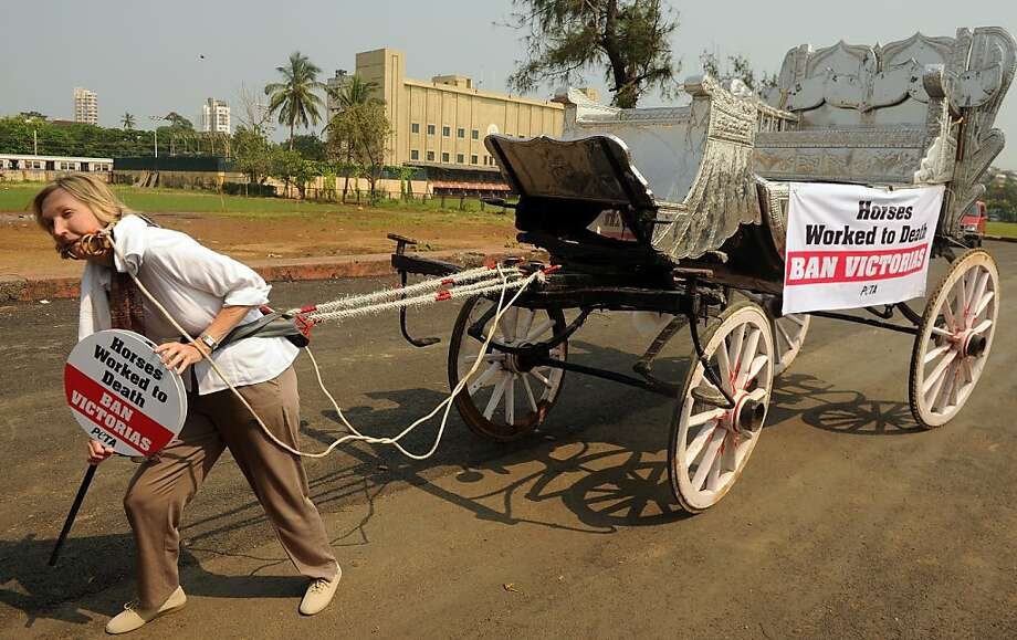 The yoke's on her:In Mumbai, PETA activist Ingrid E. Newkirk protests the allegedly cruel treatment of horses used to pull heavy Victoria carriages. The silver-colored Victorias, modeled on open carriages used during Queen Victoria's reign, first appeared in Mumbai in British colonial times. Today they only ferry tourists. Photo: Indranil Mukherjee, AFP/Getty Images