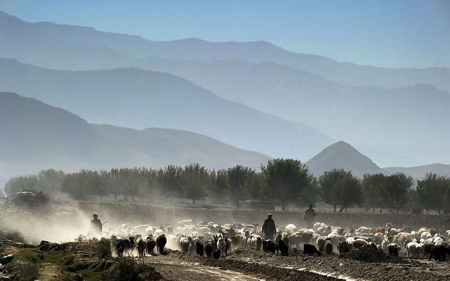 Afghanistan's hidden gem: Shepherds lead their flock across a field in the seldom-visited Payan Shahr valley, which runs parallel to the Kokcha River in Afghanistan's Badakhshan province. Photo: Roberto Schmidt, AFP/Getty Images