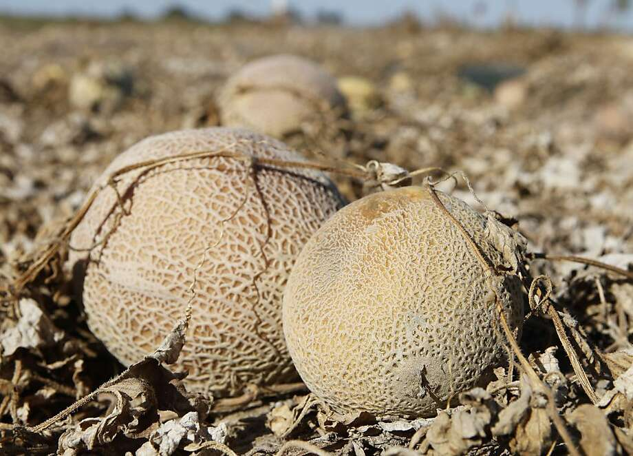 Cantaloupe at a Colorado farm led to deadly Listeria outbreak, but private auditors rated it as safe. Photo: Ed Andrieski, AP
