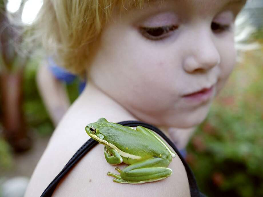 Frog got your shoulder? In Columbus, Miss., 3-year-old Helen Imes gives a lift to a hitch-hopper. Photo: Birney Imes, Associated Press