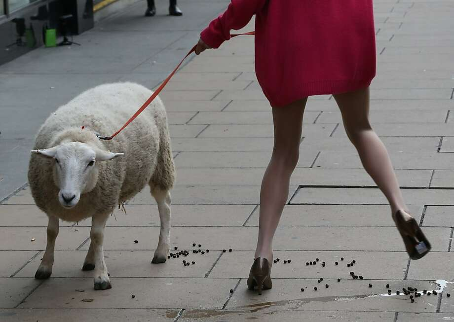 "Pee-ewe!A model dances to avoid soiling her pumps after nature calls on Oxford Street in London. She was one of four models escorting sheep in support of The Campaign for Wool's ""Wool Week,"" which encourages people to donate unwanted woolens items to be reused, recycled or resold. Photo: Peter Macdiarmid, Getty Images"