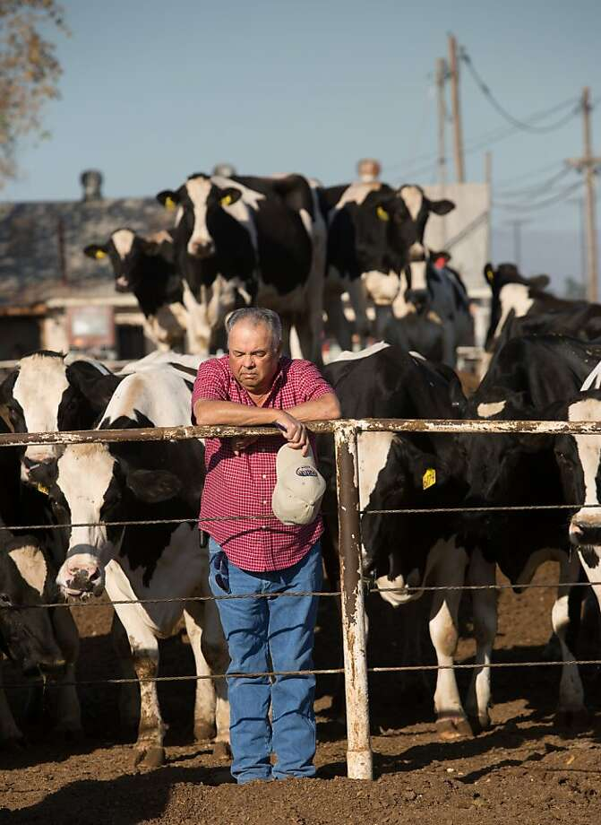 Dairyman Ray Souza in Turlock is among those in the state struggling to stay afloat. Photo: Tomas Ovalle, Special To The Chronicle