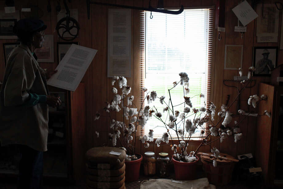 With it's history rooted in cotton production, a cotton plant is  on display in the Pelham Community History Museum on March 13, 2012. At left, Catherine Porter, the leader of the Pelham Community Activity Committee, reads a document about the community's history. Photo: Lisa Krantz, San Antonio Express-News / © 2012 San Antonio Express-News