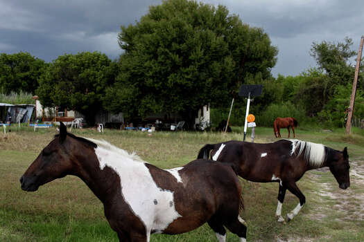Horses that escaped their fencing loiter in the yard of Elvis Caruthers on Sunday, August 26, 2012. Their owner appeared soon after to corral them. Photo: Lisa Krantz, San Antonio Express-News / © 2012 San Antonio Express-News