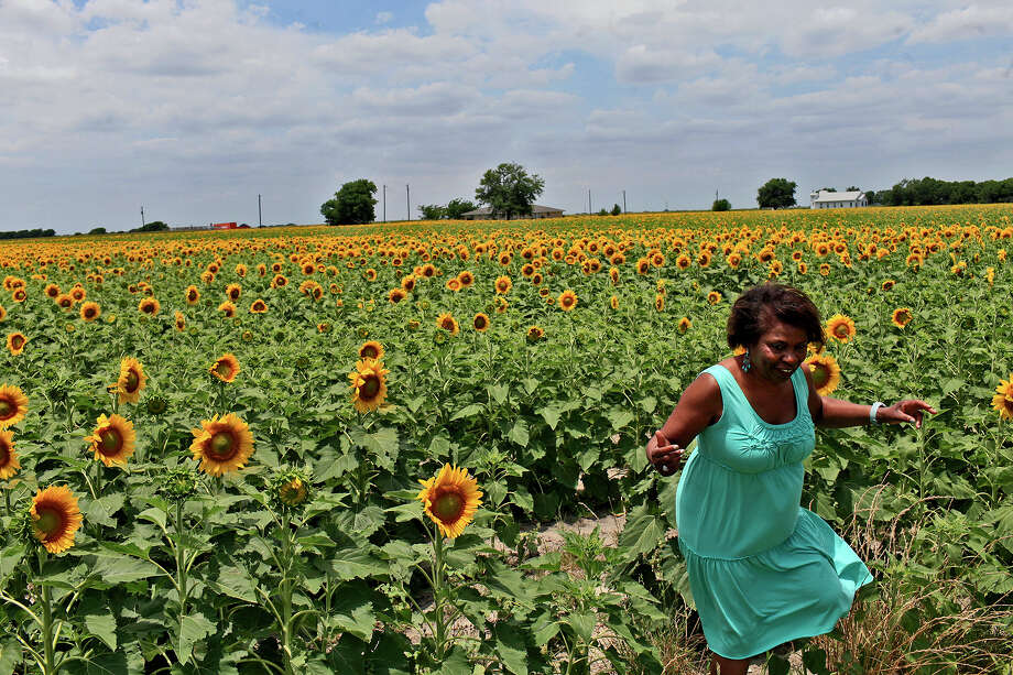 Lottye Burns, of Cedar Hill, whose husband, Lewis Burns, grew up in Pelham, walks out of a field of sunflowers after posing for a photograph taken by her husband amid them on Sunday, May 27, 2012. The land owned by Pelham residents is now leased to farmers for crops including cotton and corn. This summer was the first time residents remembered sunflowers being grown there. Photo: Lisa Krantz, Express-News / © 2012 San Antonio Express-News