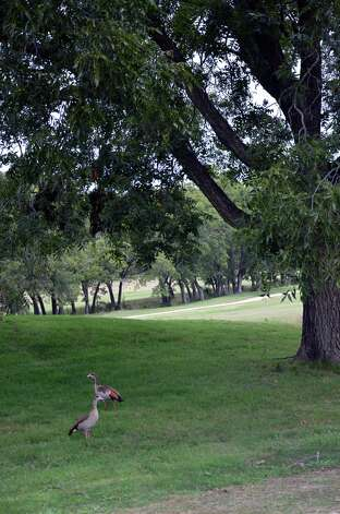 Waterfowl rest in the shade along the No. 9 fairway at Canyon Lake Golf Club.