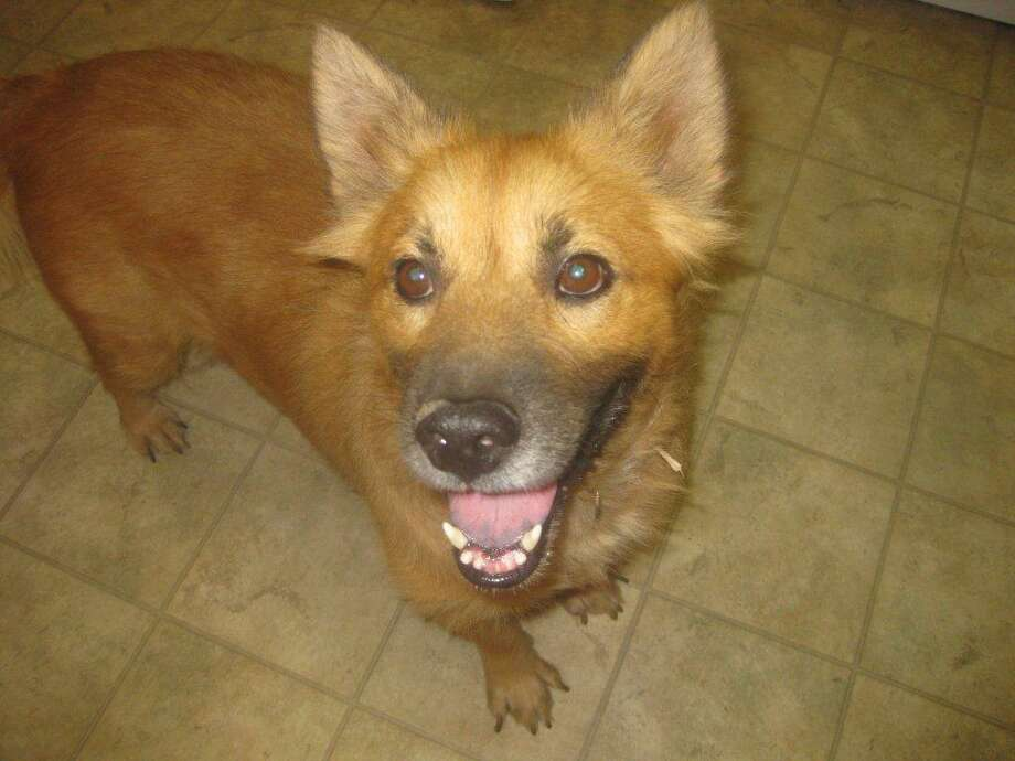 Charlie needs a loving family. Photo: Tejas Rescued Pet Adoptions