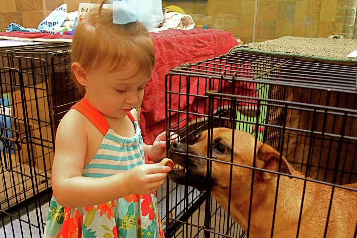 People who missed the Sept. 15 Sugar Land Animal Services pet adopt-a-thon have another chance to adopt a cat or dog in November. Above, Olivia Weibel, 1, of Sugar Land gives a dog treat to Layla, a shepherd mix at the Sugar Land pet adopt-a-thon.