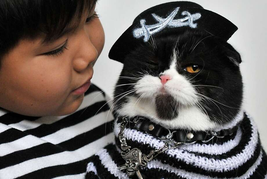 Arrr, cabin boy, where's my eyepatch? Find it in good haste or I shall have ye keelhauled!The Dread Pirate Fluffy doesn't realize that he lives in a landlocked country - Kyrgyzstan.  (Cat show in Bishkek.) Photo: Vyachslav Oseledko, AFP/Getty Images