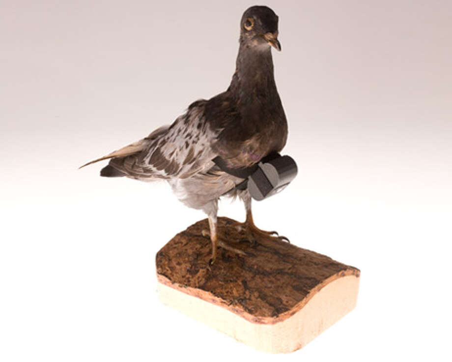 The CIA developed this camera small and light enough to be carried by a pigeon. After being released, the bird would fly over a target on its return home. Pigeon pictures were taken within hundreds of feet of the target so it was much more detailed than imagery from airplanes and satellites. The camera could be set to take photographs at a set interval, starting after release or a pre-set delay. A tiny, battery-powered motor advanced the film and cocked the shutter. Details of pigeon missions are still classified. Photo: Central Intelligence Agency