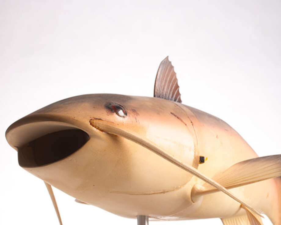 "The CIA developed the unmanned underwater vehicle fish ""Charlie"" to study aquatic robot technology. It contains a pressure hull, ballast system and communications system in the body, and a propulsion system in the tail. It is controlled by a wireless line-of-sight radio handset. Photo: Central Intelligence Agency"