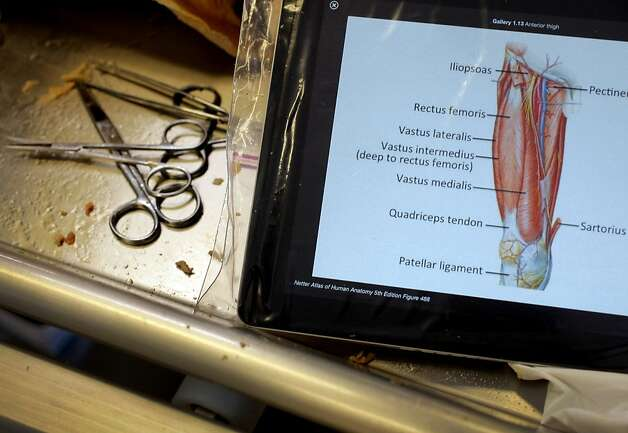 Students use iPads as textbooks to guide them through dissection in the renovated anatomy lab. Photo: Sarah Rice, Special To The Chronicle