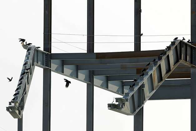 Crows perch on a steel structure that will hold seats at the 49ers' Santa Clara stadium, to open in 2014. Photo: Carlos Avila Gonzalez - San Fran, The Chronicle