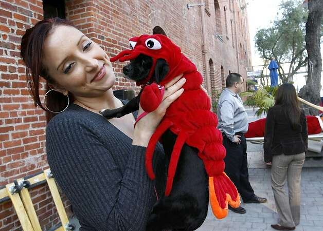 Sofia Gomez cozies up with a reputed lobster in San Francisco. Photo: Katy Raddatz, SFC