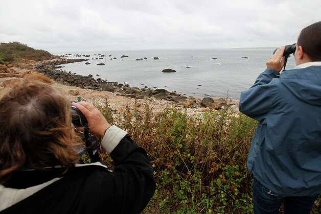 File photo of people on a tour of Plum Island check out seals relaxing on the rocky coast of Plum Island in New York, Wednesday, Oct. 6, 2010. Photo: Seth Wenig, AP Photo/Seth Wenig / AP2010 Associated Press