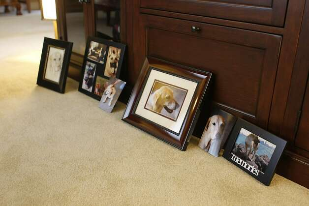 Pictures of Jeff Aoki and Sandy Wong's late dog Sunny are spread out in the living room of their home. Before Sunny passed away from cancer Dr. Cox was able to give them a few extra days, in which the couple showered her with love and treats. Photo: Rashad Sisemore, The Chronicle