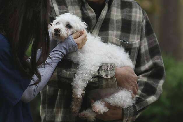 Jeff Aoki holds his dog Claire, a mixed Maltese-Poodle with cancer, while Dr. Shea Cox pets Claire in the backyard of Jeff Aoki' and Sandy Wong's home. Dr. Shea Cox, founder of Bridge Veterinary Service, a Pet hospice, is providing care for Claire at the couples home in Oakland. Pet hospices are a growing trend, which began in the Bay Area, and draw from similar principles involved in human hospices. Photo: Rashad Sisemore, The Chronicle