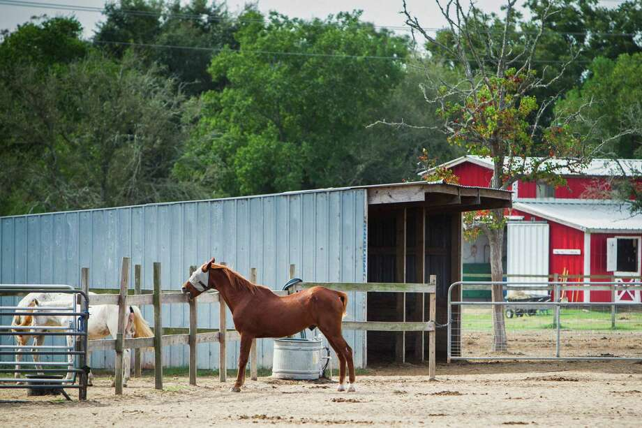Horses stand in the corral at the Habitat for Horses ranch, Monday, Oct. 15, 2012, in Hitchcock. Photo: Michael Paulsen, Houston Chronicle / © 2012 Houston Chronicle