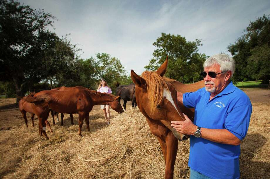 Jerry Finch, right, President and Founder of Habitat for Horses, and Rebecca Williams, Executive Director, examine several of their horses at the Habitat for Horses ranch. Photo: Michael Paulsen, Houston Chronicle / © 2012 Houston Chronicle