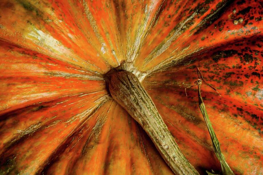 $113 MILLION - Value of pumpkins harvested from the top six