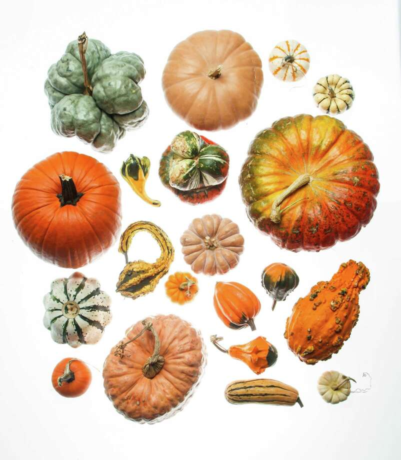 Pumpkins, squashes and gourds in the wildly varied Cucurbita genus are botanical works of art. Photo: Michael Paulsen, Houston Chronicle / © 2012 Houston Chronicle