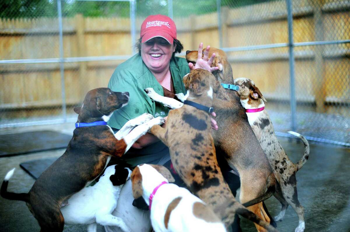 Veterinarian Kathy Caughlin is mobbed by dogs just delivered from San Antonio to the Humane Society for Greater Nashua, N.H., shelter. The dogs were saved from being euthanized in the Alamo City.