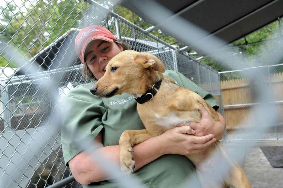 "Veterinarian Kathy Caughlin holds ""Thomas Tripod,"" a three-legged dog rescued in San Antonio and transported to the Humane Society for Greater Nashua, N.H., on Monday, Oct. 1, 2012. Thomas will be put up for adoption, along with more than 40 other dogs from S.A., many of which were rescued from euthanization by the Alamo Rescue Friends group. Photo: Billy Calzada, San Antonio Express-News / © San Antonio Express-News"