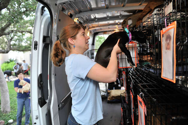 Virginia Davidson of Alamo Rescue Friends loads a dog during a previous ARF transport on April 22, 2012. The dog will be adopted after his journey to Nashua, N.H. Photo: Robin Jerstad,  For The Express-News / SAN ANTONIO EXPRESS-NEWS
