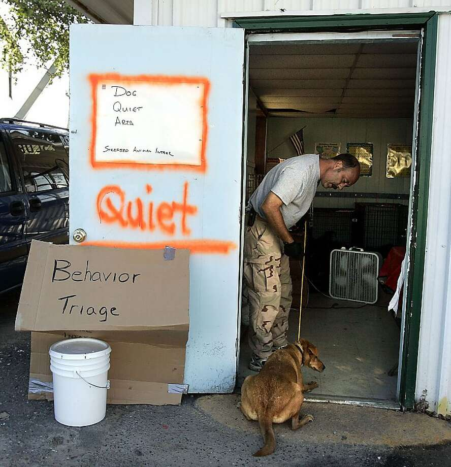 Jim Crosby tries to coax a dog at the Muttshack Animal Rescue Foundation shelter in New Orleans. Photo: Don Ryan, Associated Press