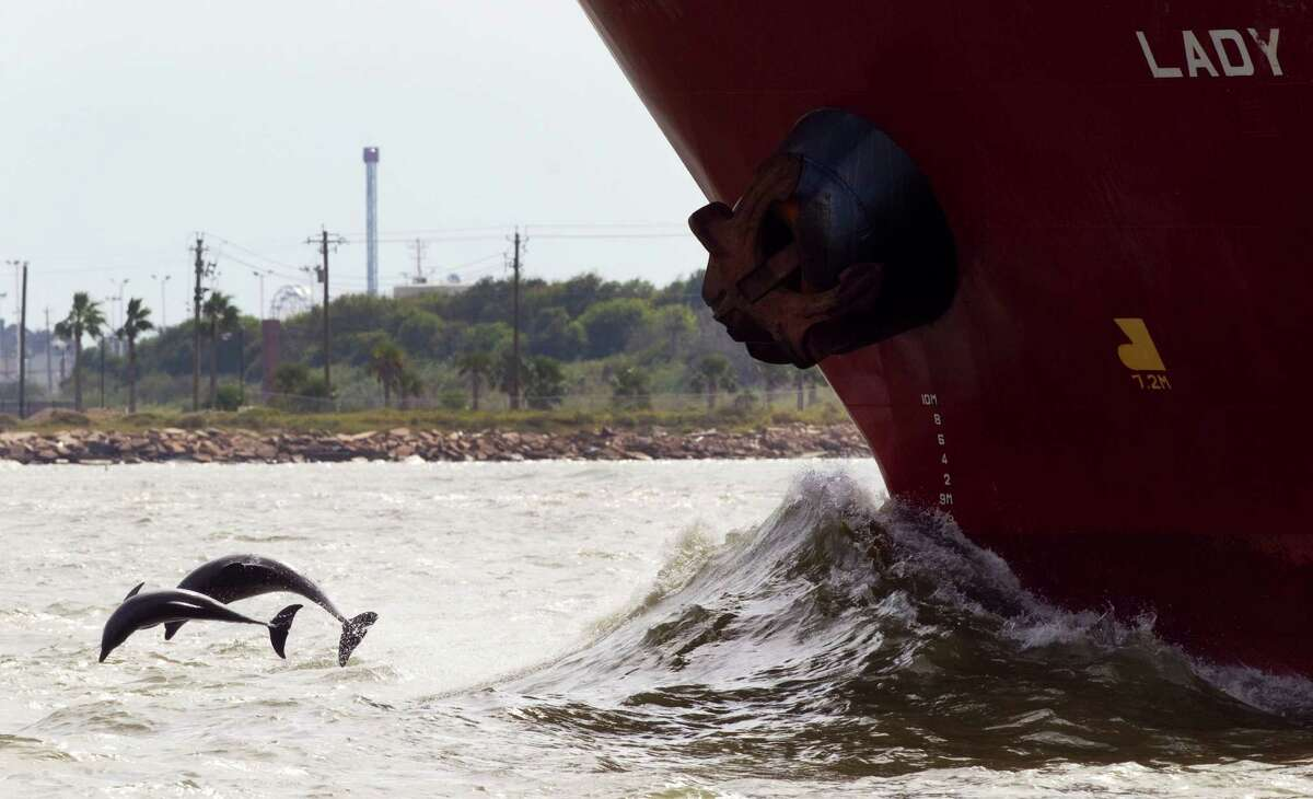 Dolphins leap out of the water near a ship passing Pelican Island in Galveston Bay, a lush bird habitat with prime fishing spots.