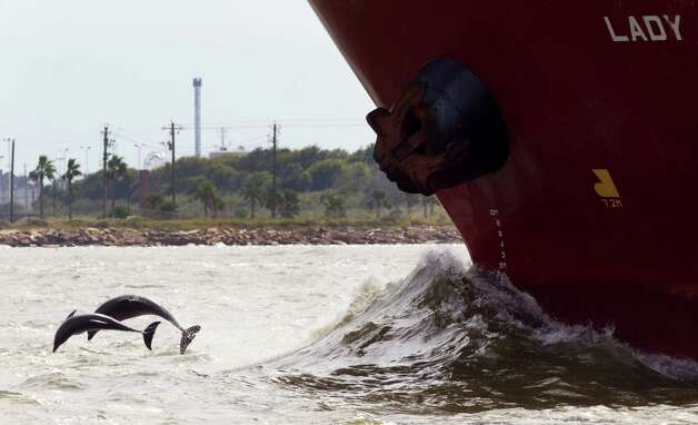 Dolphins leap out of the water near a ship passing Pelican Island in Galveston Bay, a lush bird habitat with prime fishing spots. Photo: Brett Coomer / © 2012 Houston Chronicle