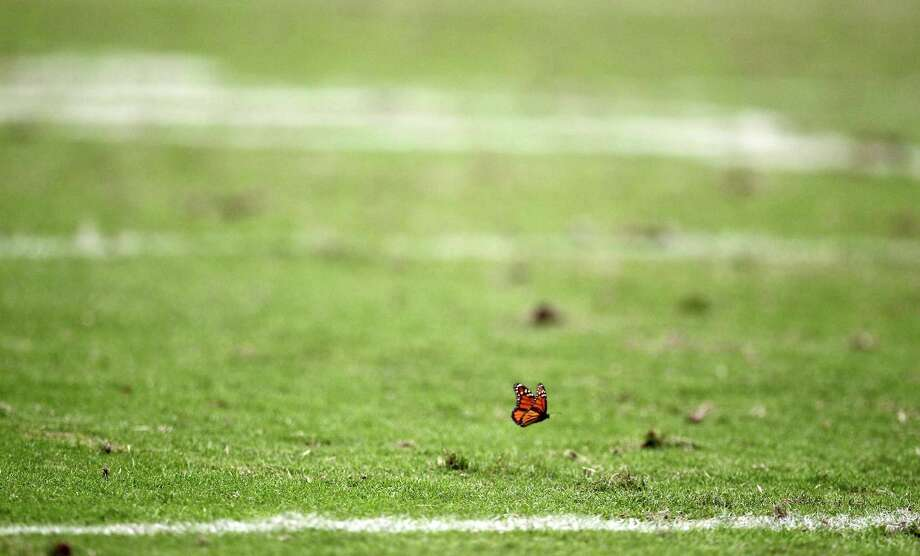 A butterfly gets a worms eye view of the Houston Texans game against the Baltimore Ravens during the third quarter of an NFL football game, Sunday, Oct. 21, 2012, at Reliant Stadium in Houston. Photo: Nick De La Torre, Houston Chronicle / © 2012  Houston Chronicle