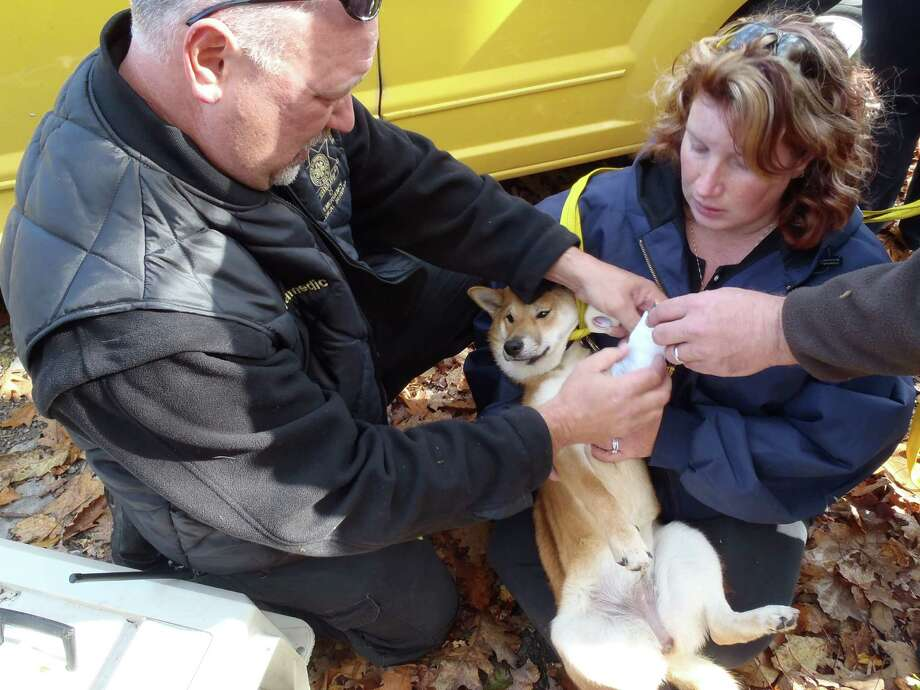 """Shiba,"" a 6-month-old Shiba Inu puppy, is treated for his broken leg after he was rescued from a crevice in Thacher Park. (Albany County Sheriff's Office photo)"