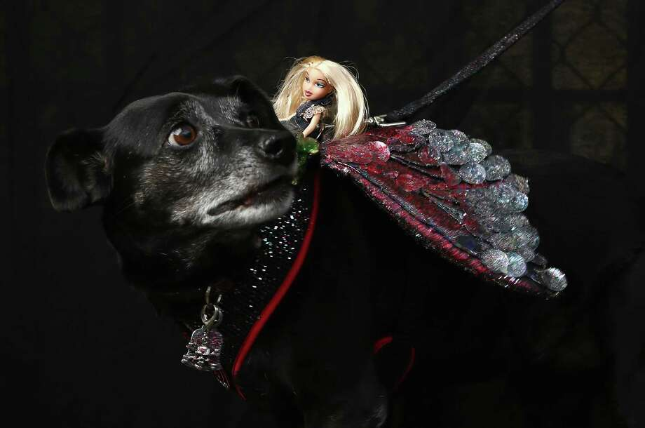 NEW YORK, NY - OCTOBER 20:  Rescued dog Tiki poses carrying a Barbie at the Tompkins Square Halloween Dog Parade on October 20, 2012 in New York City. Hundreds of dog owners festooned their pets for the annual event, the largest of its kind in the United States. Photo: John Moore, Getty Images / 2012 Getty Images