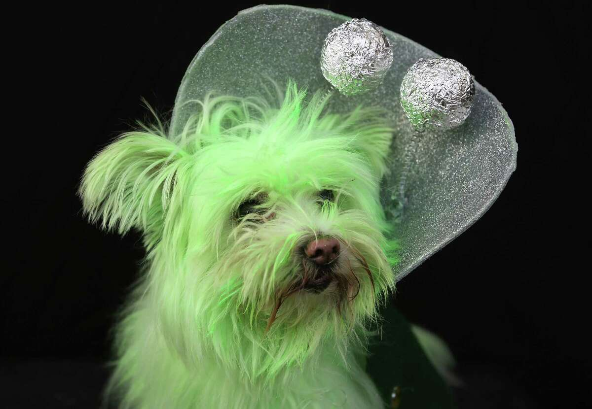 NEW YORK, NY - OCTOBER 20: Wilson, a rescued mixed breed, poses as a Martian at the Tompkins Square Halloween Dog Parade on October 20, 2012 in New York City. Hundreds of dog owners festooned their pets for the annual event, the largest of its kind in the United States.