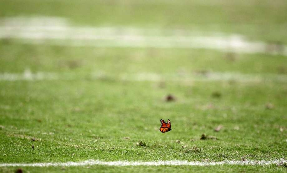 A butterfly gets a worms eye view of the Houston Texans game against the Baltimore Ravens. (Nick de la Torre / Houston Chronicle)