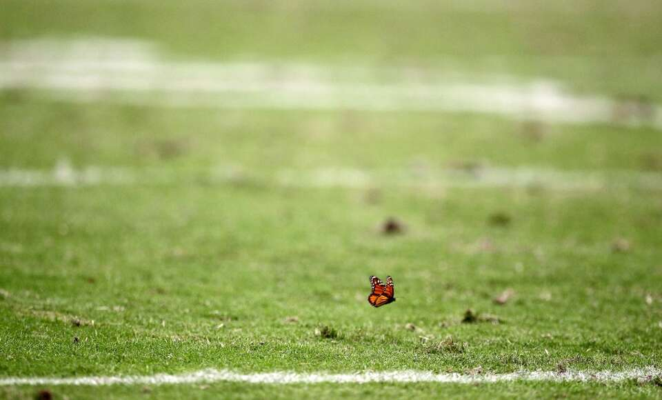 A butterfly gets a worms eye view of the Houston Texans game against the Baltimore Ravens. (Nick de
