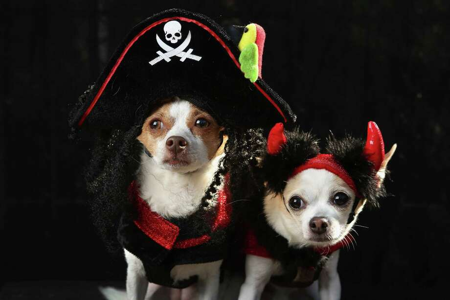 NEW YORK, NY - OCTOBER 20:  Little, an Alessandra breed, and Pants pose as a pirate and a devil at the Tompkins Square Halloween Dog Parade on October 20, 2012 in New York City. Hundreds of dog owners festooned their pets for the annual event, the largest of its kind in the United States. Photo: John Moore, Getty Images / 2012 Getty Images