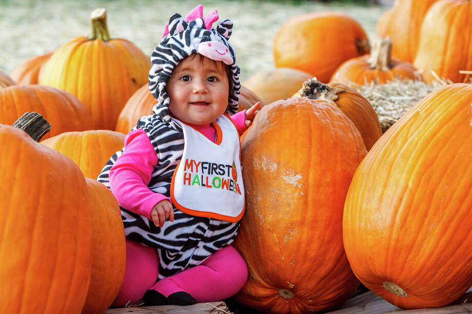 Ten-month-old Amelia Luna poses in her zebra costume at the Helotes Hills United Methodist Church Pumpkin Patch, 13222 Bandera Road.