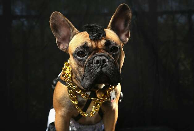 I pity the fool who doesn't vote me best of show. Photo: John Moore, Getty Images