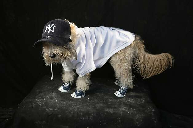 Yankee fan Shaggy looks a little down - no wonder after that ALCS. Photo: John Moore, Getty Images