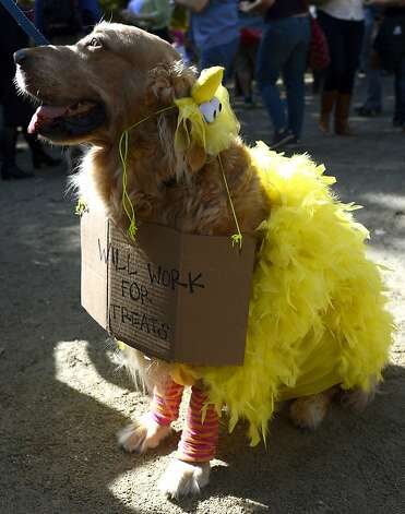 Big Bird has fallen on hard times. Photo: Timothy A. Clary, AFP/Getty Images