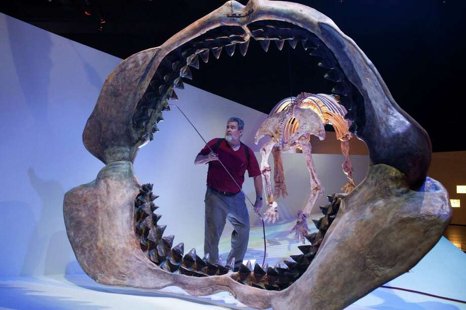John Barber cleans the Megalodon jaws exhibit using compressed air in the The Morian Hall Of Paleontology Oct. 21, 2012 in Houston, TX at the Museum of Natural Science. Dust can be seen behind and below the skull. The museum cleans the exhibits three times a year, but will move the cleaning to a more frequent schedule of four times a year. Photo: Eric Kayne / © 2012 Eric Kayne