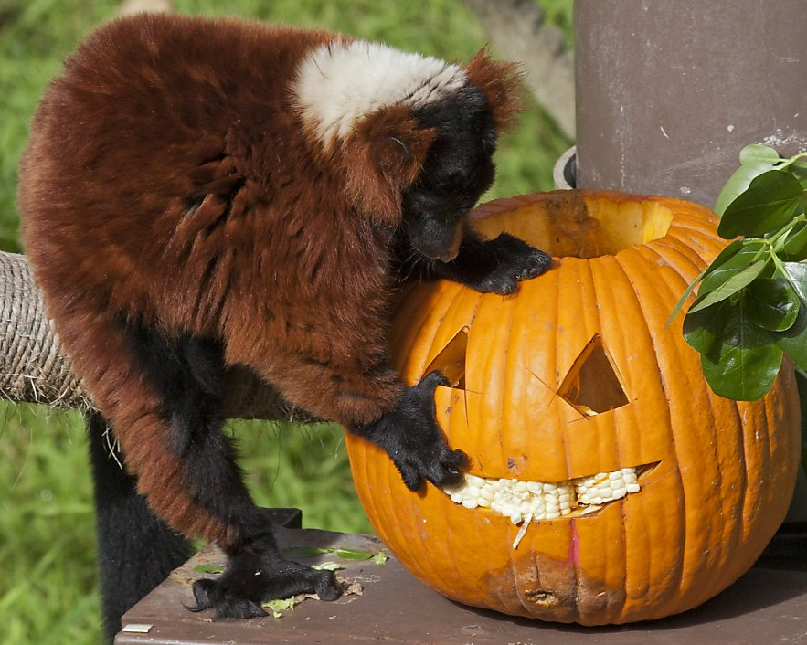 should zoos be booed Dear friend, i am so excited to invite you and/or your business to participate at boo at the zoo this october transporting guests to worlds of fantasy and awe punctuated with endless trick-or-treating, thrilling.