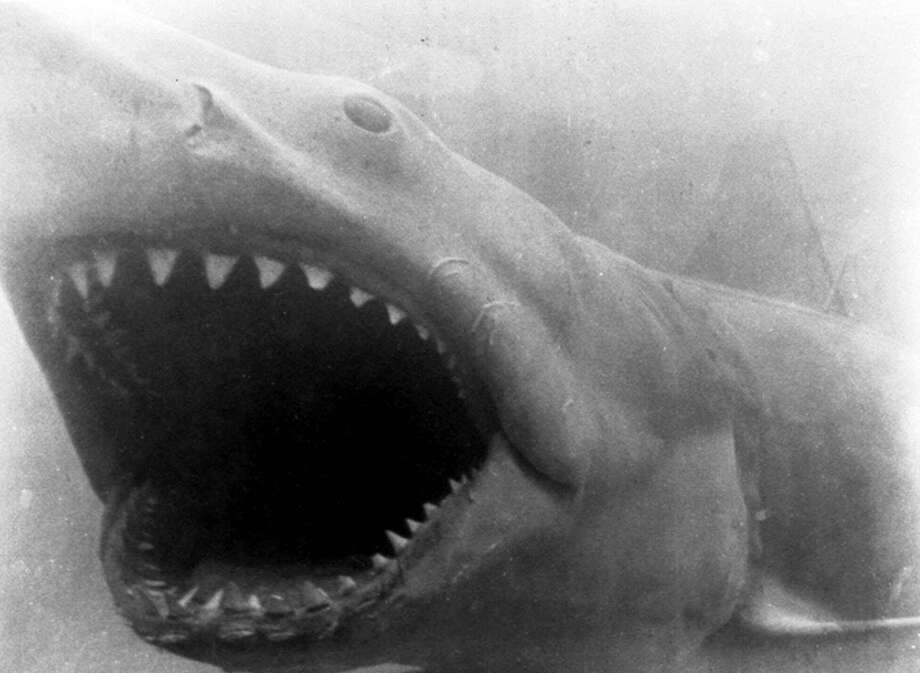 "The Great White Shark from ""Jaws"" made beach enthusiasts and swimmers think twice before getting in the water. Photo: AP / AP"