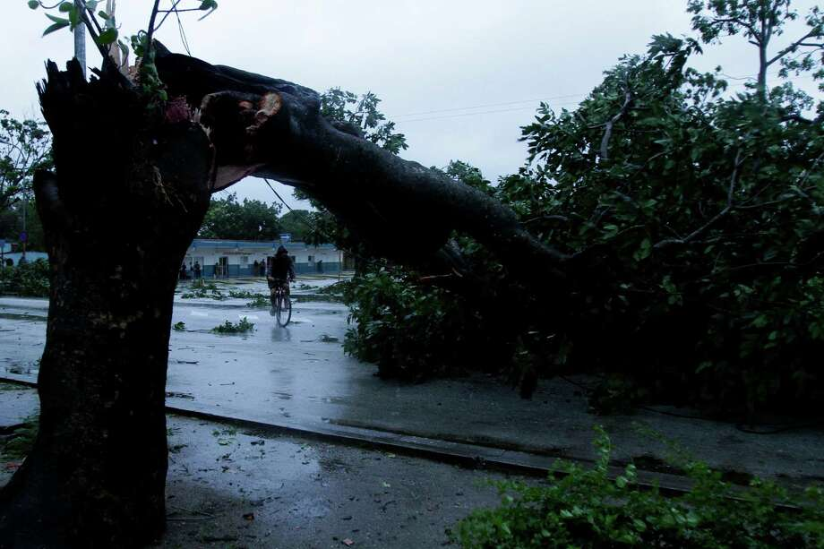 A man rides his bicycle under the arc made by a tree knocked down by Hurricane Sandy in Gibara, Cuba, Thursday, Oct. 25, 2012. Hurricane Sandy blasted across eastern Cuba on Thursday as a potent Category 2 storm and headed for the Bahamas after causing at least two deaths in the Caribbean. Photo: Franklin Reyes, Associated Press / AP