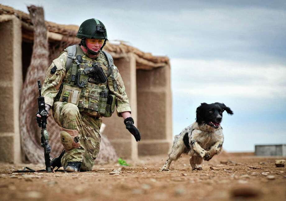 This is a undated Ministry of Defence handout photo made available on Thursday Oct. 25, 2012  of Lance Corporal Liam Tasker and his Springer spaniel mix Theo.   Theo the bomb-sniffing army dog who died in Afghanistan on the day his handler was killed has been honored with Britain's highest award for animal bravery. Springer spaniel mix Theo was posthumously awarded the Dickin Medal on Thursday at a ceremony in London. (AP Photo/ MoD) Photo: HOPD / MOD